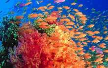 Global marine analysis suggests food chain collapse