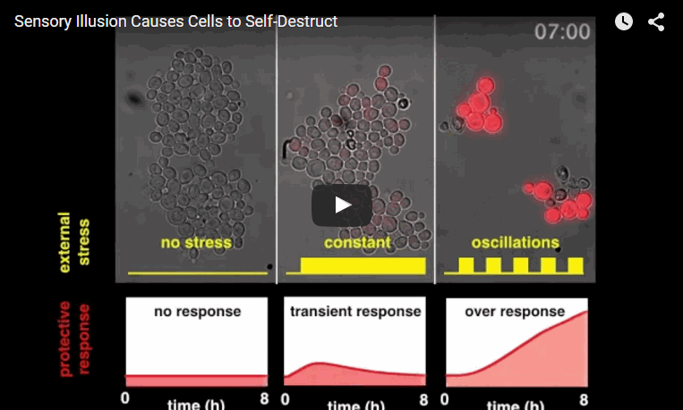 Sensory Illusion Causes Cells to Self-Destruct Might Help Cancer Therapeutics