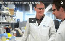 Protein handbrake halts leukaemia in its tracks