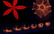 Novel 4D printing method blossoms from botanical inspiration