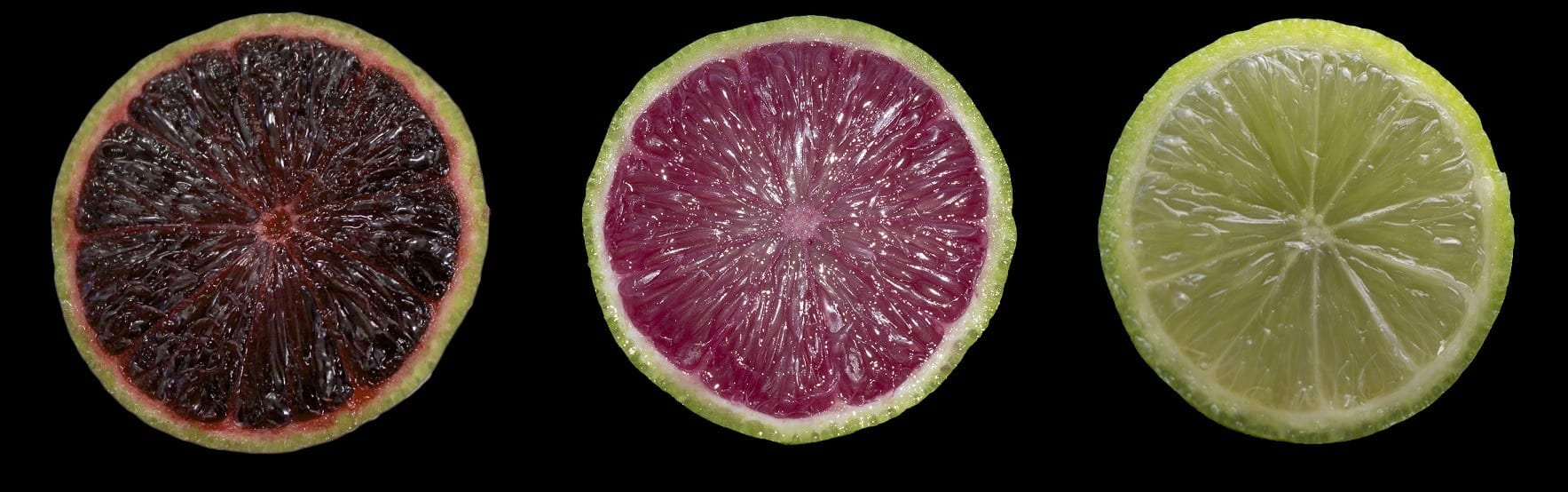 Purple limes and blood oranges with anthocyaninscould be next for Florida citrus