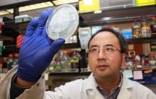 Scientists discover way to potentially track and stop human and agricultural viruses