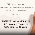 Scientists Generate a New Type of Human Stem Cell That Has Half a Genome