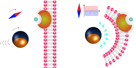 The Janus particles move by means of rotating magnetic fields (l.). If the magnetic field is altered, the microrobots generate an electric field (r.). A chemical compound (bluish green bullet) is released which than destroys defective cells. (Visualisations: ETH Zurich / Salvador Pané)