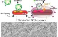 Chemists Combine Biology, Nanotechnology to Create Alternate Energy Source