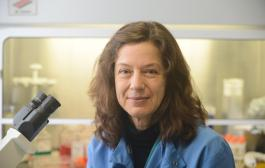 Modified flu virus can 'resensitize' resistant pancreatic cancer cells to chemotherapy