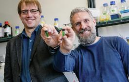 Researchers use cyanobacteria for the production of chemicals