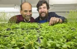 Mechanism discovered for plants to regulate their flowering in a warming world