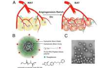Fat-fighting nanoparticles to fight obesity