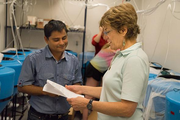 Dartmouth Research Assistant Professor Pallab Sarker (left) and Professor Anne Kapucinski conduct an experiment on the use of microalgae as a sustainable feed ingredient for aquaculture of tilapia. CREDIT Dartmouth College
