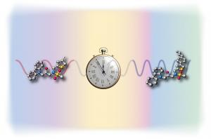 Most living organisms, including humans, have a biological clock that resets every 24 hours, regulating functions such as sleep/wake cycles and metabolism. Copyright : Institute of Transformative Bio-Molecules