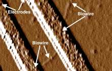 Synthetic Biology: New bacteria produce ultra-miniature nanowires for next generation electronics