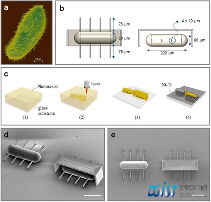 World's First Ciliary Stroke Motion Microrobots for Chemical and Cell Delivery