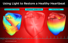 Light Instead of Electric Shock Tames Lethal Heart Disorders in Mice and Virtual Humans
