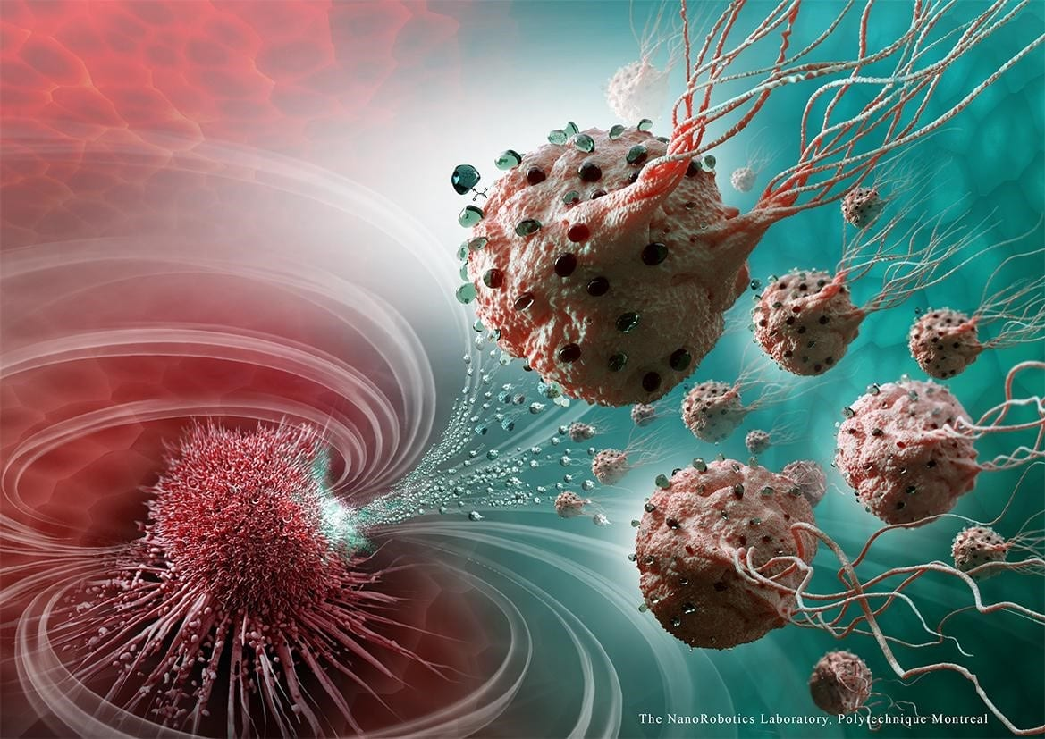 Swarms of magnetic bacteria could be used to deliver drugs to tumors