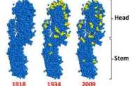 Universal flu vaccine designed by scientists