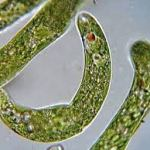 Smartphone microscope creates interactive tool for microbiology