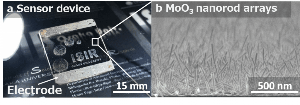 a. Photo figure of the gas sensor device b. Cross-sectional FE-SEM image of the MoO3 nanorod arrays.