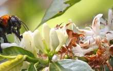10 ways to help pollinators: Pesticide regulation, diversified farming systems and long-term monitoring