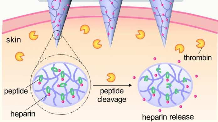 Schematic of thrombin-responsive patch that releases heparin in response to thrombin. Image courtesy of Yuqi Zhang.