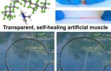 Wolverine inspired: a self-healing, transparent, highly stretchable material that can be electrically activated