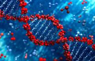 First controllable DNA switch to regulate the flow of electricity within a single, atomic-sized molecule