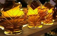 Maple syrup extract dramatically increases the potency of antibiotics