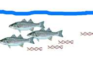 Fishing for DNA: Free-floating eDNA identifies presence and abundance of ocean life