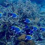 Refuge could preserve climate-sensitive corals