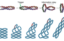 Molecular computers start to take shape with switchable DNA mini-machines