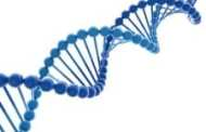 DNA delivery into drug-resistant bacterial pathogens offers new opportunities