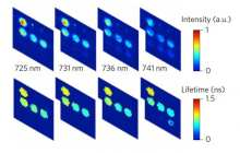 New bioimaging technique can monitor multiple molecular interactions quickly and economically