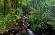 The tropics now emit more carbon than they capture
