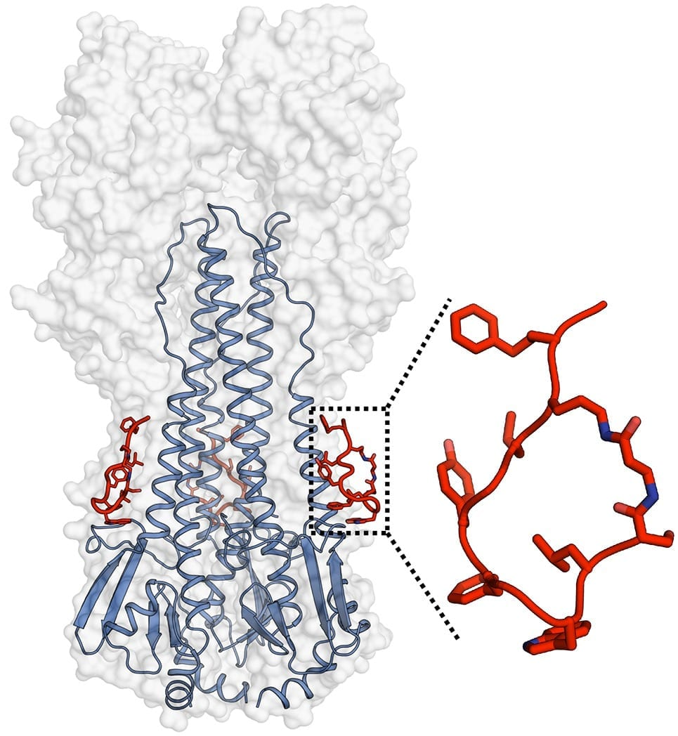 Broad-Spectrum Inhibitors of Influenza Viruses Developed