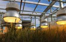 New green revolution set to start with speed breeding
