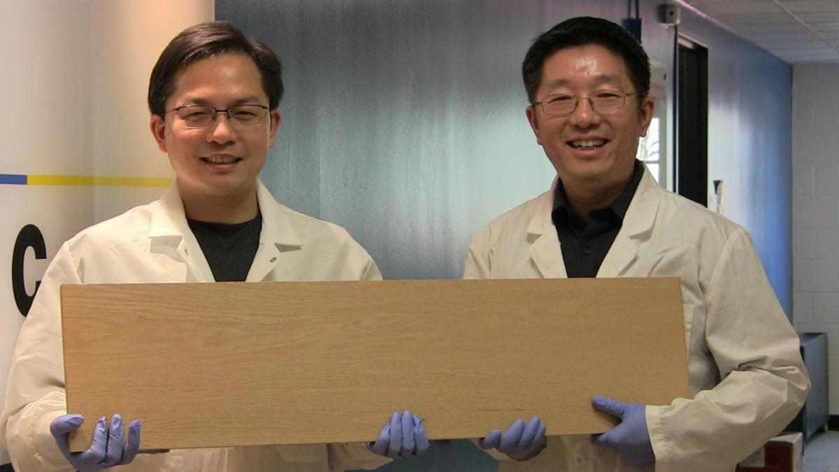 How wood could replace steel by becoming as strong as titanium but lighter and cheaper