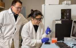 Can DNA be programmed to deliver cancer drugs?