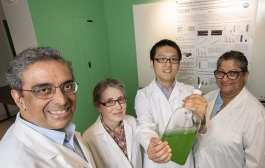 Creating fertilizer out of thin air with engineered bacteria