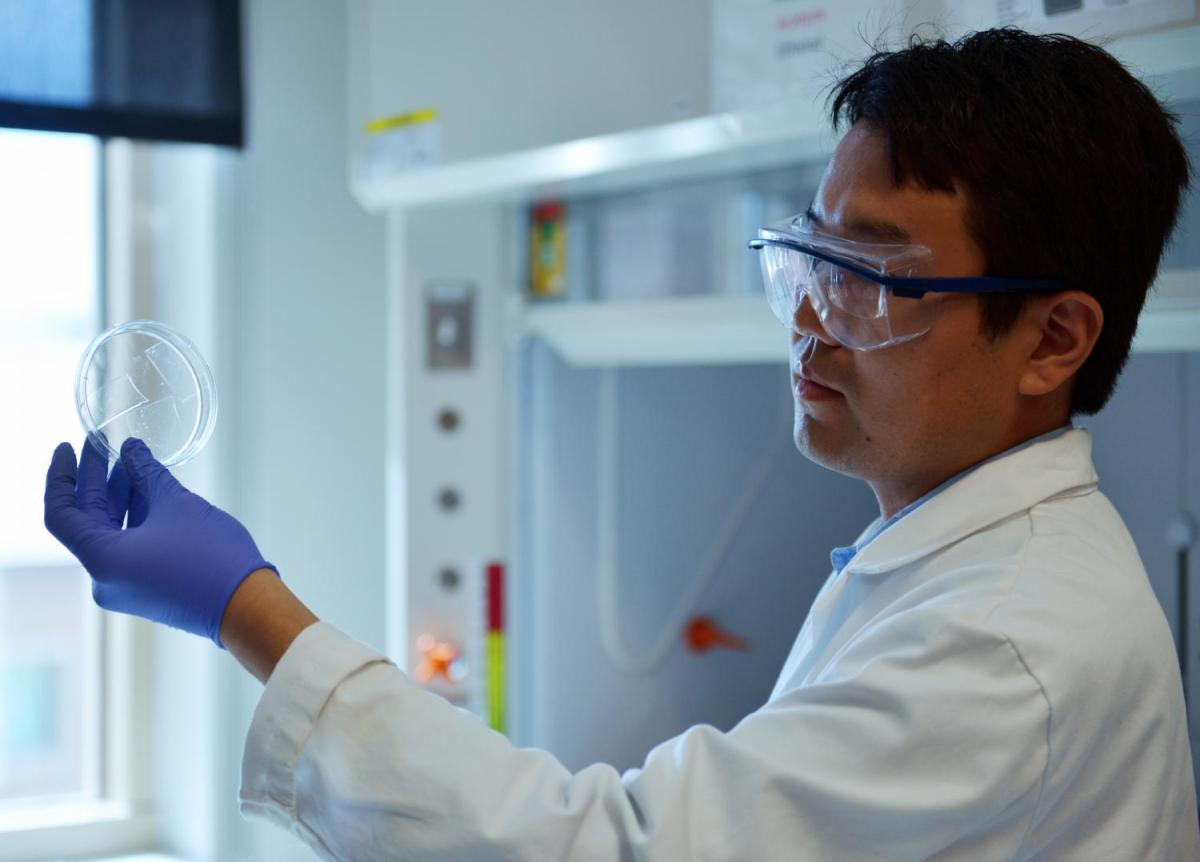 A transparent aerogel made from readily-available beer waste could insulate existing windows and more