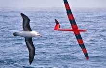 Training robotic gliders to soar like birds using artificial intelligence