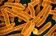Stopping an antibiotic-resistant superbug with genetic disruption