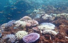 Some reef-building corals primed to resist coral bleaching