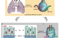 Turning water into fuel with a new lung-inspired design