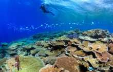 A glimmer of hope for the world's coral reefs