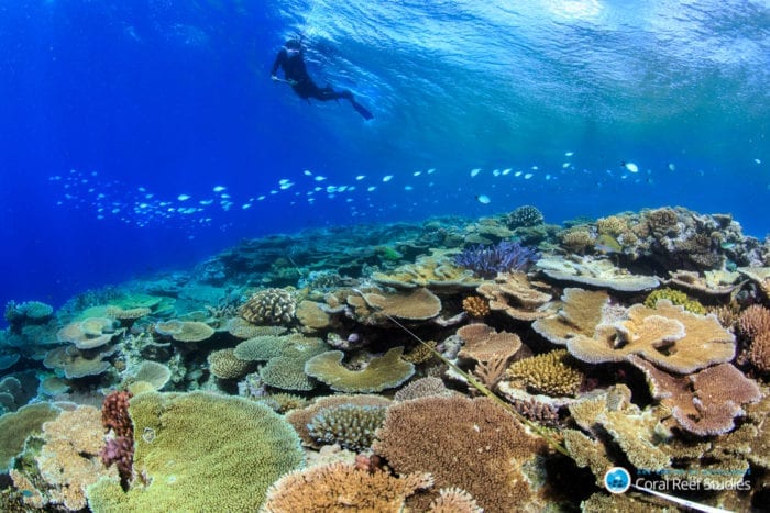 A Glimmer Of Hope For The World S Coral Reefs Innovation