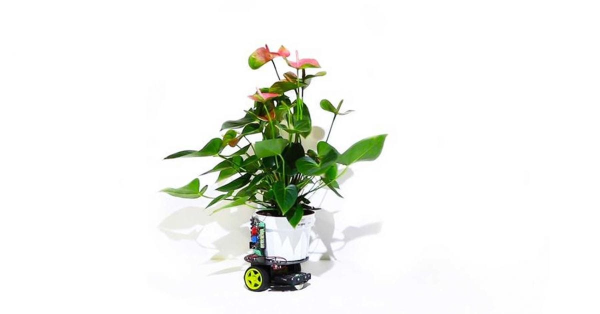 The dawn of cyborg botany : Introducing a plant-robot hybrid