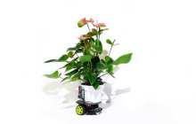 The dawn of cyborg botany : Introducing a plant-robot hybrid