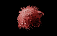 The possibility of developing novel dendritic cell-based immunotherapies against cancer