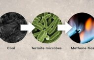 Could termite-gut microbes lead to a clean coal revolution?