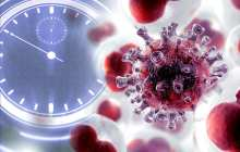 A new drug shows potential to halt cancer cells growth by stunting the cells biological clock